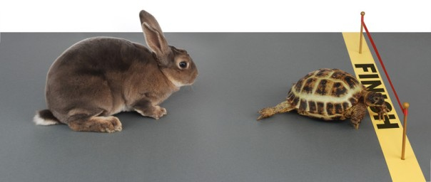 turtle-rabbit-race